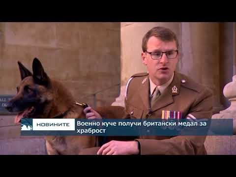 Военно куче получи британски медал за храброст