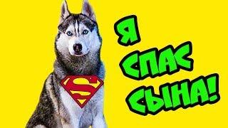 Я СПАС СВОЕГО СЫНА БУБЛИКА! (Хаски Бандит) Говорящая собака
