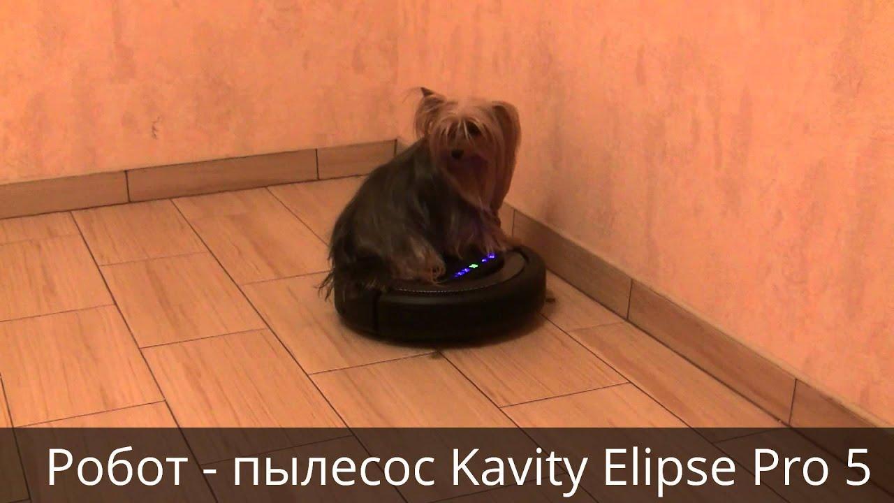 Собака йорк Тигра тестирует робот-пылесос Kavity Elipse Pro 5