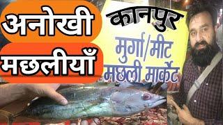 Cheapest FISH MARKET in KANPUR- Vijay Nagar | Best street food in Kanpur Vlogs kanpur
