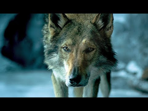 ALPHA | Trailer & Filmclips deutsch german [HD]
