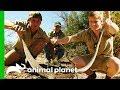 - Robert Irwin Wrangles His First Ever Wild Rattlesnake | Crikey! It