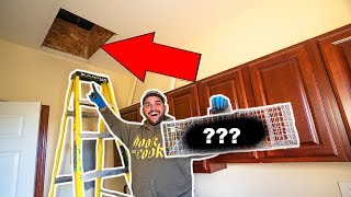 TRAPPING the Mystery Animal LIVING in My ATTIC!!! (What Is It?)