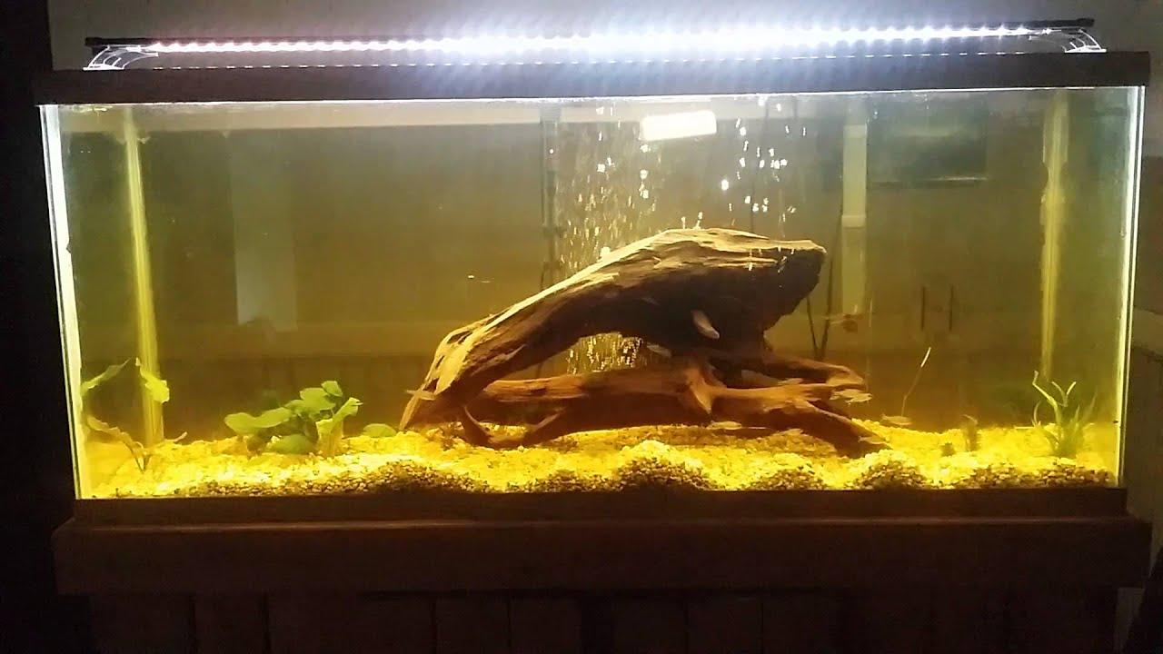 finnex 24 7 planted plus led aquarium light review youtube