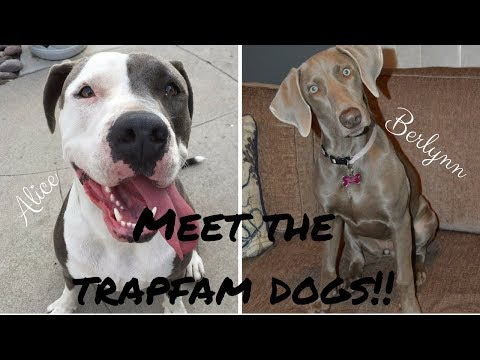 MEET THE TRAPFAM DOGS!!!