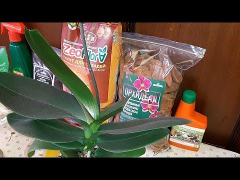 Как Пересадить Орхидею после Покупки | Phalaenopsis MIX | Фаленопсис Микс