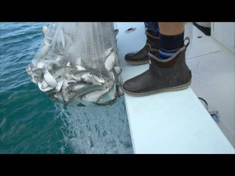 BEST Bait on Earth Heres WHY Commercial Fishing