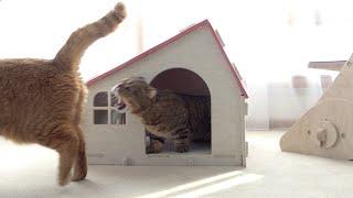 귀여운-집-지키는-고양이