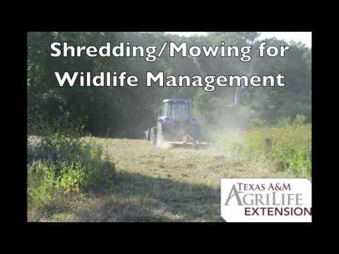 Shredding/Mowing for Wildlife Management in Texas