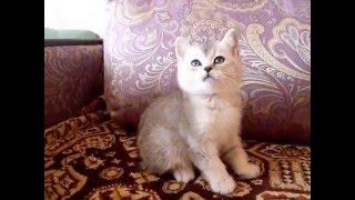 Котята-совята