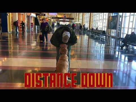 Golden Retriever, Ginny!  Golden Retriever Dog Training | Golden Retriever Board and Train