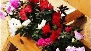 Como Fazer uma Floreira no Vaso de Tubo de PVC