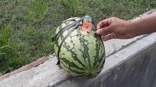 Experiment Watermelon Vs cracker new 2018