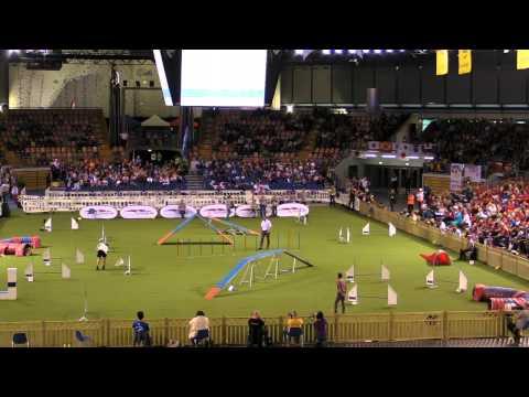 Roland Kolenko (Slovenie) et Ammy(Parson Russell Terrier) finale ind small AWC 2014