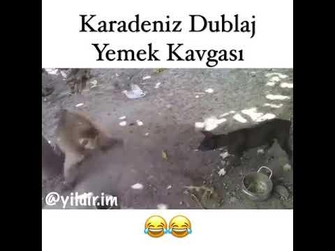 Maymun Köpeği Dövüyor- Karadeniz Dublaj
