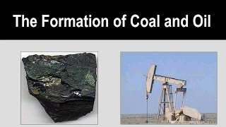 coal forming Coal forming , here at wwwpixsharkcom you will find images galleries with a bite that will delight & amaze you.
