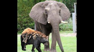 Bear & Elephant