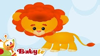 Lion - Learning Animal Sounds and Names for Kids & Toddlers - BabyTV