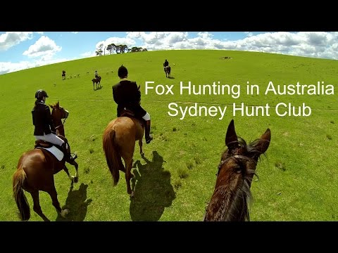 Fox Hunting (Day 1) Across A Breathtaking 18,000 Acres In Australia With The Sydney Hunt Club