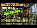 Kicau Murai Batu Saat Senja  Mp3 - Mp4 Download