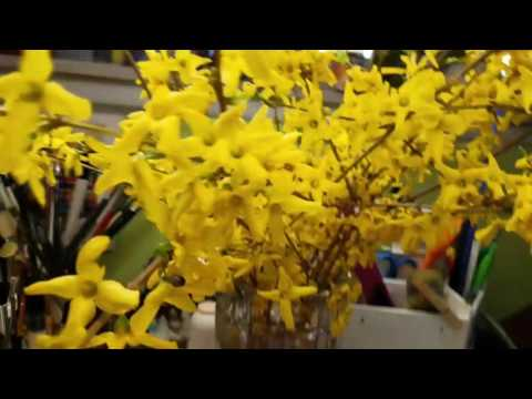 Loose Painting Forsythia In Watercolor