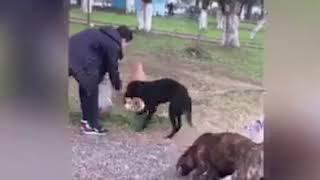 მიუსაფარი ძაღლები