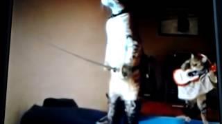 Кот в сапогах прикол