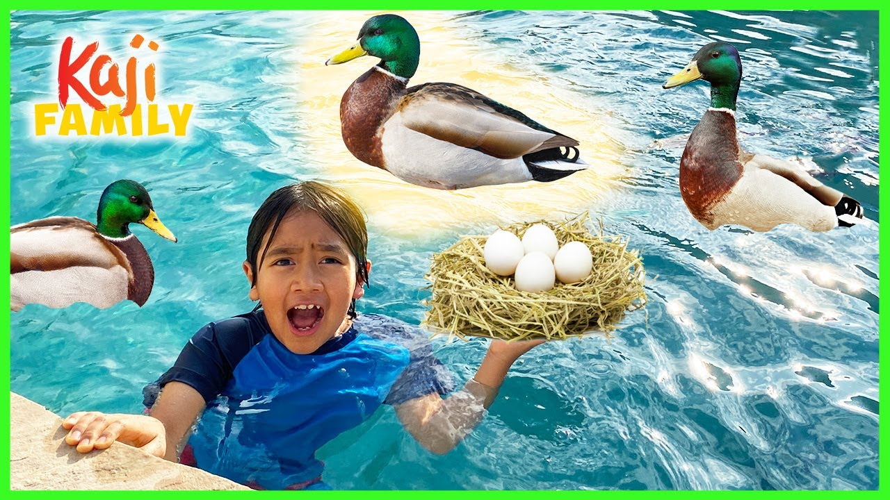 Ducks took over our swimming pool and lay eggs!!!