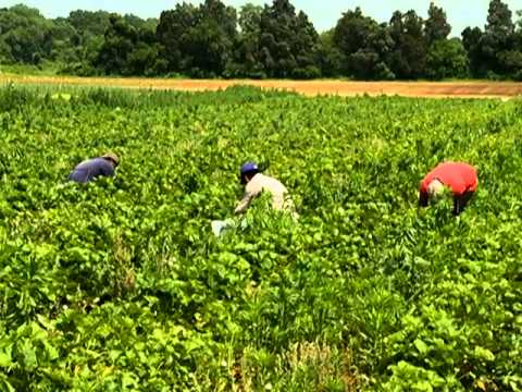 Farmers need Cooperative Extension