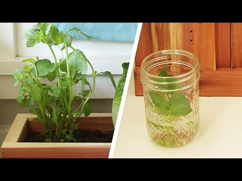 Did You Know You Can Grow Vegetables From Scraps?