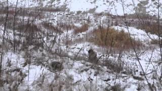 Смотреть видео заказать топосъемку http://www.mbp.kiev.ua/toposemka
