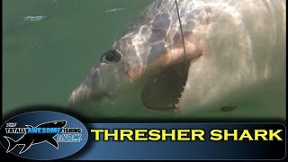 BRITISH RECORD THRESHER SHARK (OFFICIAL VIDEO) - The Totally Awesome Fishing Show