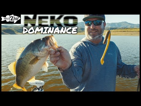 the-rise-of-the-neko-rig-finesse-bass-tactic