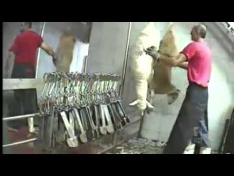 Animal cruelty concerns spread to sheep trade