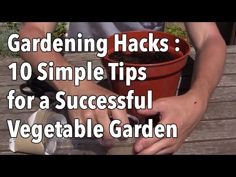 gardening-hacks---10-simple-tips-for-a-successful-vegetable-garden