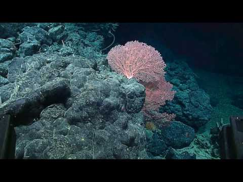 Deep Waters off Hawaii expedition: Papahānaumokuākea Marine National Monument