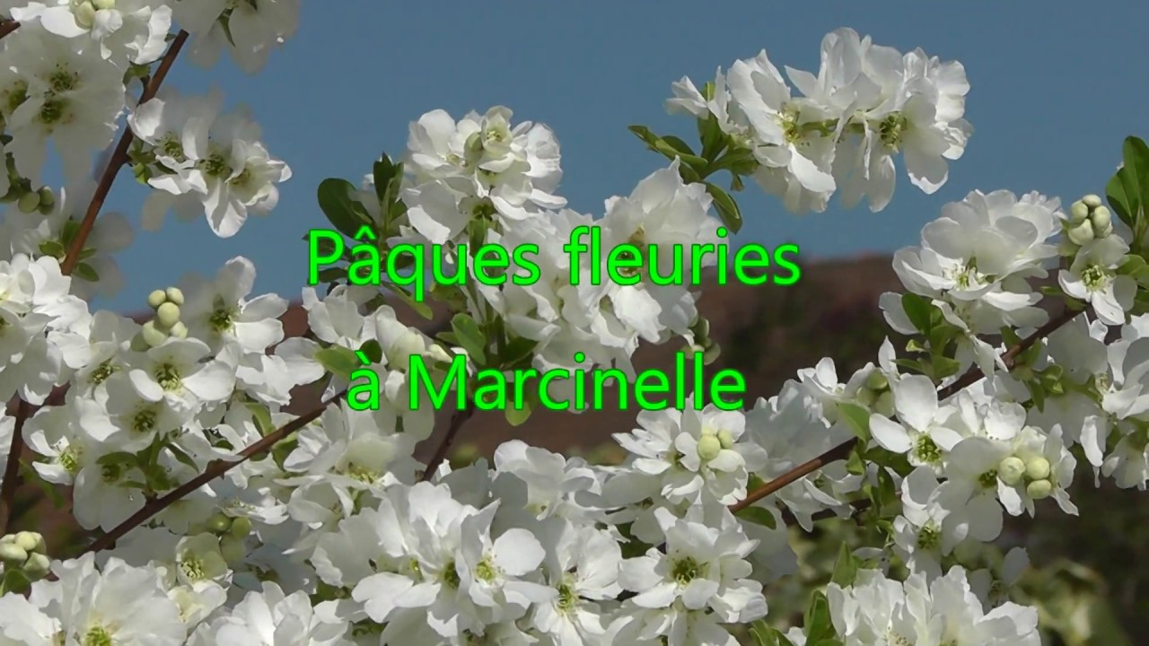Pâques fleuries à Marcinelle