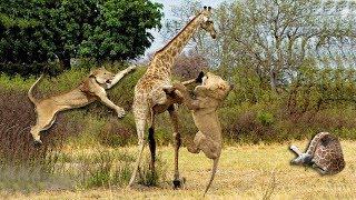 キリン セーブ 赤ちゃん から 5 ライオン, 野生動物, 象, クロコダイル,...