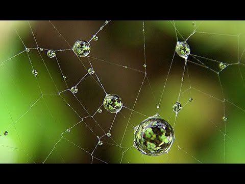 The Web of Life : Documentary on the Interconnection of All Living Things (Full Documentary)