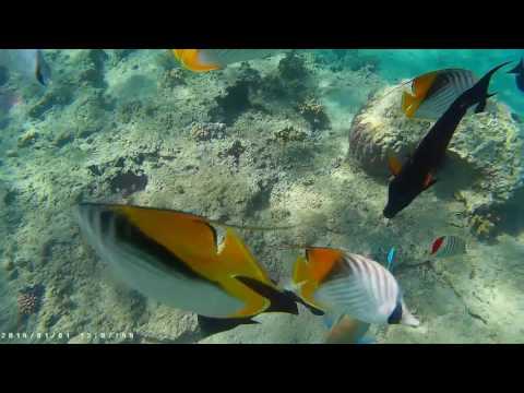 Отель Albatros Aqua Blu Sharm. Египет.