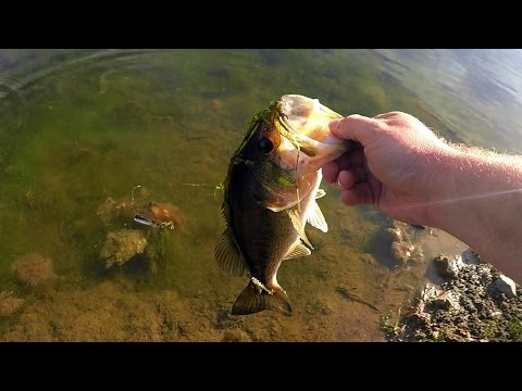 Thumbnail: A Bass On Every Bait??? Ultimate Pond Fishing Challenge!
