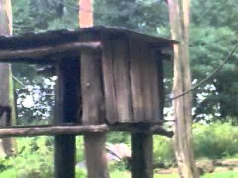 sumatra orang utan und andere affen arten bei der f tterung im dortmunder zoo youtube. Black Bedroom Furniture Sets. Home Design Ideas