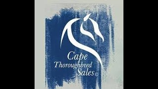 CTS - Cape Premier Yearling Sale 2019