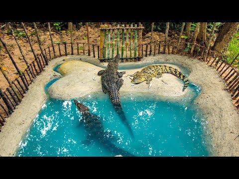 Build Crocodile Pond And Feeding Wild Crocodile