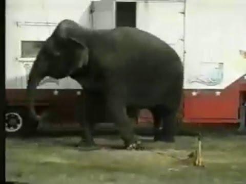 Anti-Circus TV Commercial