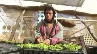 الزراعة بدون تربة..هل تكون حلا لمشكلة نقص المياه في مصر؟