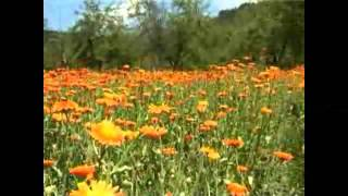 RSE: Med iz bezmednog cvijeta, TV Liberty