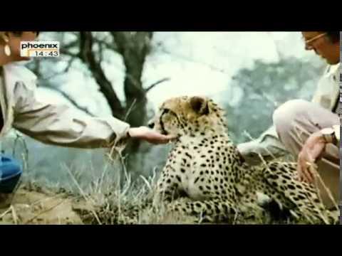 Die großen Diven  ZDF-History