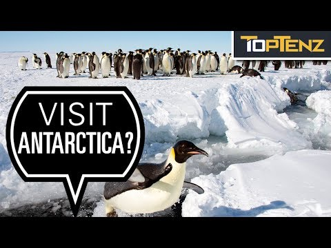 Some Reasons you SHOULD Visit Antarctica!