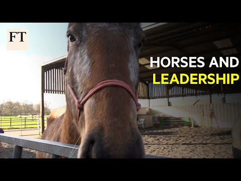 What Horses Can Teach Us About Leadership | FT